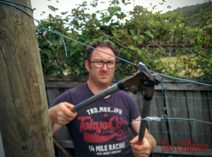 Australia (Tasmania) – Año nuevo de alambradas y coladas