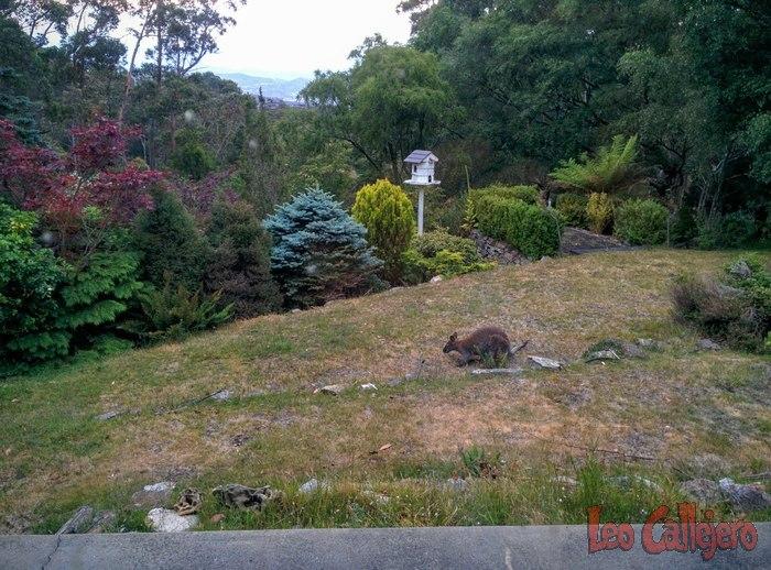 Australia (Tasmania) – Cambio de casa