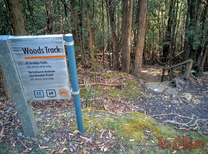 Australia (Tasmania) – Grandes paseos por el bosque