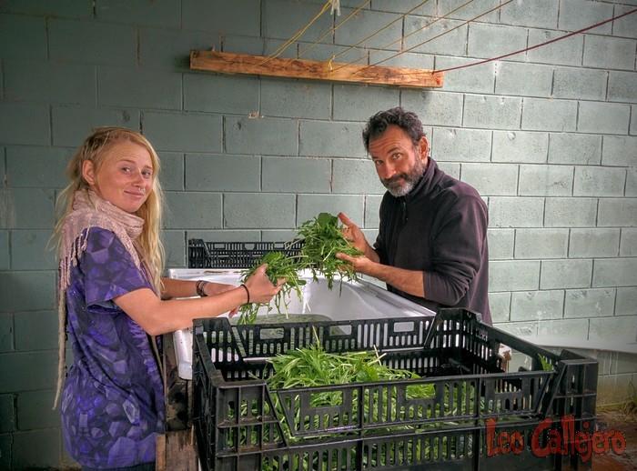 Australia (Melbourne) – Veggie Boxes Day