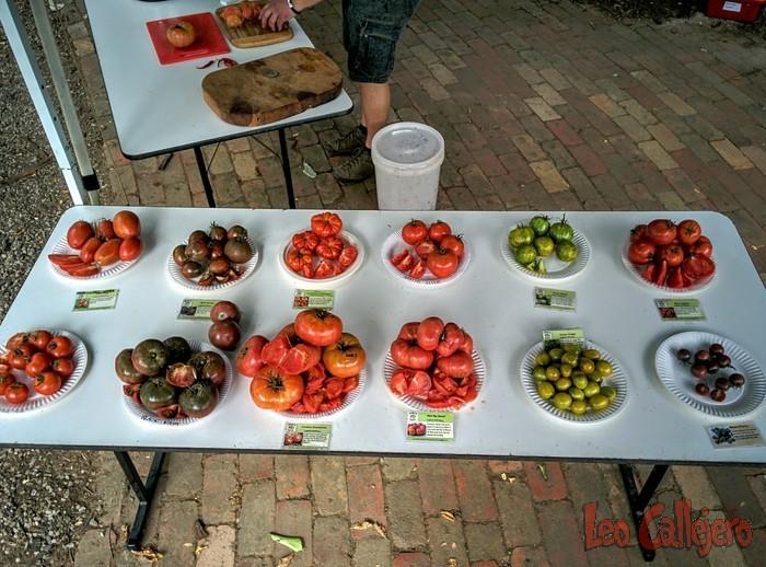 Australia (Melbourne) – Tomato Festival