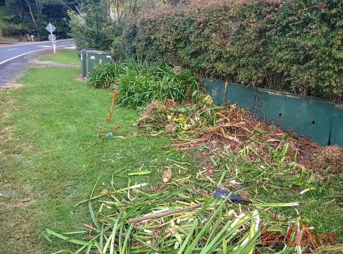 Nueva Zelanda (Whangeteau) – Cortando hierbas