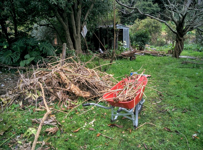 New Zealand – Vuelta al trabajo en Whangateau