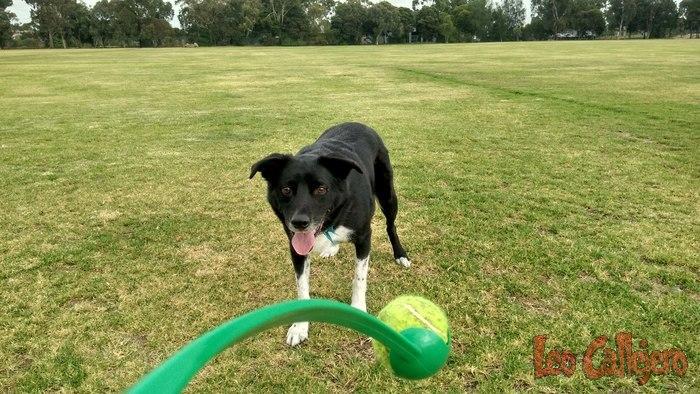 Australia (Melbourne) – Housesitting en Thornbury