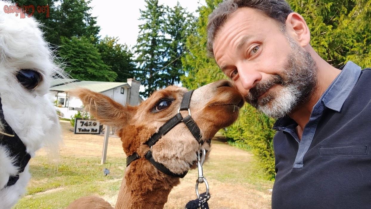 Canada (Vancouver Island) – Alpacas, llamas… y conociendo Vancouver Island.